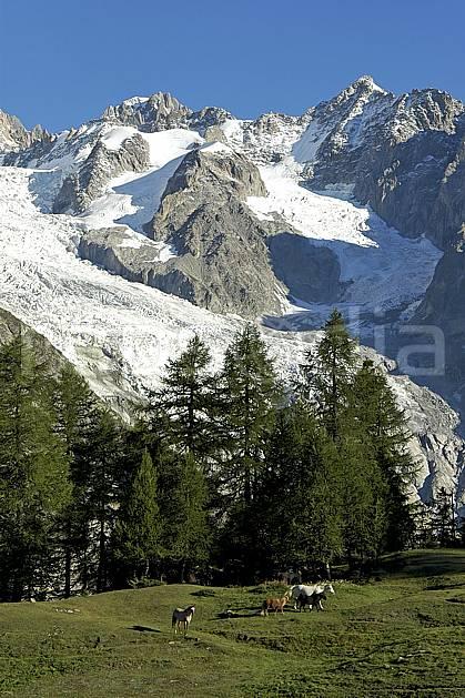 aa042119GE Depuis le Col Checrouit, Tour Ronde et aiguille d'Entrèves, Europe, CEE, cheval, glacier, arbre, faune, moyenne montagne, paysage (Italie).