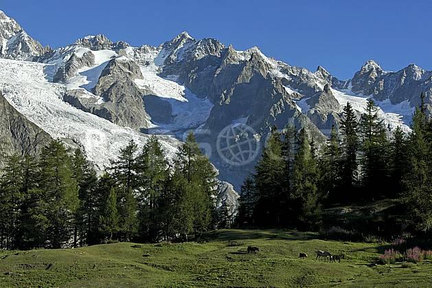 aa042122GE Depuis le Col Checrouit, Tour Ronde, aiguille d'Entrèves, glacier et aiguille de la Brenva, Tour de Jétoula, Europe, CEE, cheval, glacier, arbre, faune, moyenne montagne, paysage (Italie).