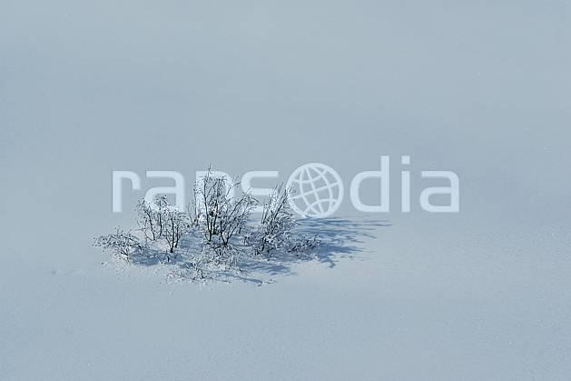 aa050027LE : Buisson dans la neige.  Europe, CEE, C02, C01, poudreuse, pureté arbre, moyenne montagne, paysage (France).