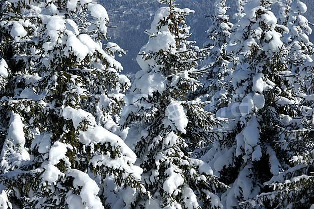aa050899LE : Depuis Saint Nicolas de Véroce, Haute-Savoie, Alpes.  Europe, CEE, sapin, enneigé, C02, C01 arbre, forêt, gros plan, moyenne montagne, paysage, Annecy 2018 (France).