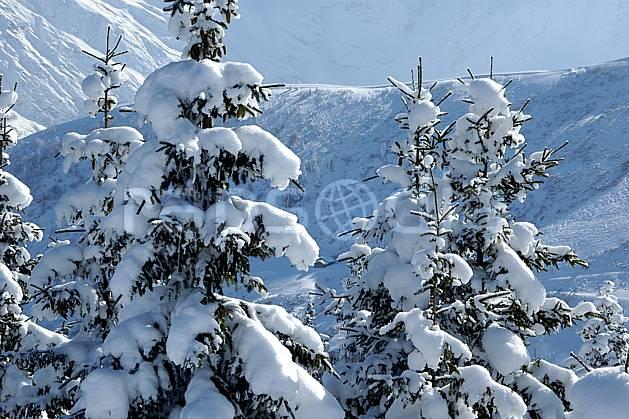 aa050901LE : Depuis Saint Nicolas de Véroce, Haute-Savoie, Alpes.  Europe, CEE, sapin, enneigé, C02, C01 arbre, forêt, gros plan, moyenne montagne, paysage, Annecy 2018 (France).