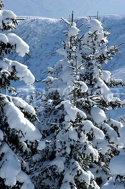 aa050902LE : Depuis Saint Nicolas de Véroce, Haute-Savoie, Alpes.  Europe, CEE, sapin, enneigé, C02, C01 arbre, forêt, gros plan, moyenne montagne, paysage, Annecy 2018 (France).