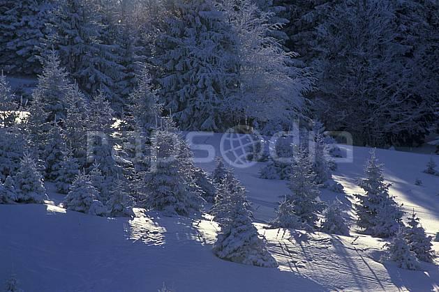 aa0513-19LE : Le Semnoz, Haute-Savoie, Alpes.  Europe, CEE, sapin, C02, C01 arbre, forêt, moyenne montagne, paysage, Annecy 2018 (France).