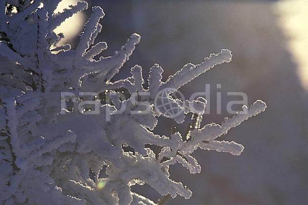 aa0513-33LE : Branche de sapin enneigée, Le Semnoz, Haute-Savoie, Alpes.  Europe, CEE, C02, C01, branche, sapin, enneigé arbre, gros plan, moyenne montagne, Annecy 2018 (France).