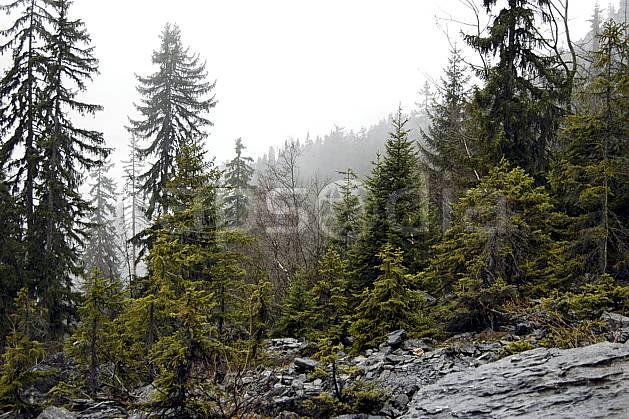 aa051553LE : Plaine Joux, Haute-Savoie, Alpes.  Europe, CEE, brouillard, mauvais temps, C02, C01, pluie, sapin arbre, forêt, moyenne montagne, paysage, Annecy 2018 (France).