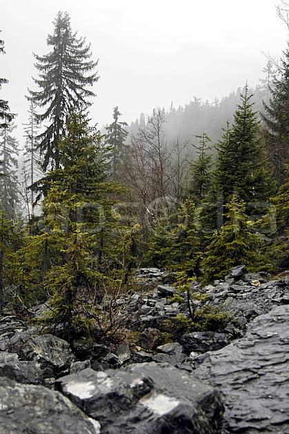 aa051555LE : Plaine Joux, Haute-Savoie, Alpes.  Europe, CEE, brouillard, mauvais temps, C02, C01, pluie, sapin arbre, forêt, moyenne montagne, paysage, Annecy 2018 (France).