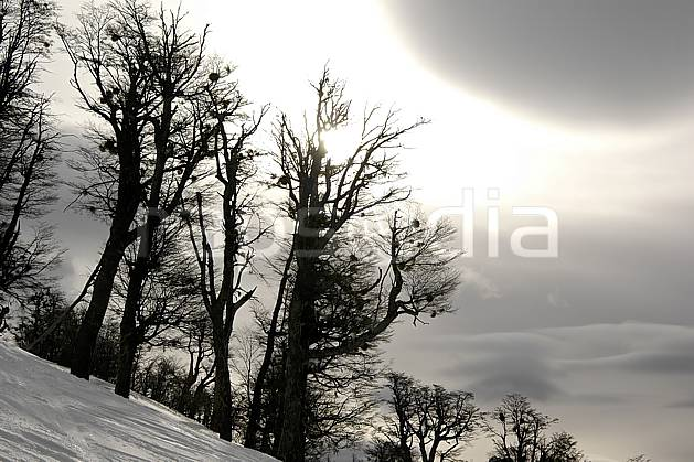 aa054843LE : Cerro Catedral, Bariloche, Patagonie.  Amérique du sud, Amérique Latine, Amérique, mauvais temps, C02, C01 arbre, moyenne montagne, nuage, paysage, soleil, voyage aventure (Argentine).