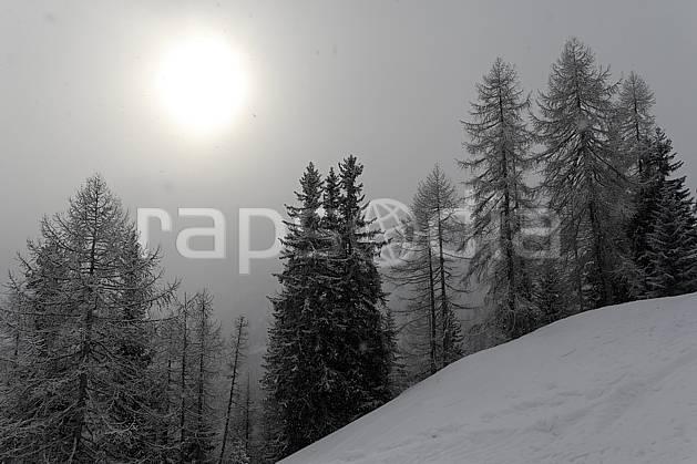 aa060741LE : Jour blanc en montagne, Alpes.  Europe, CEE, brouillard, C02, C01, mauvais temps arbre, forêt, moyenne montagne, nuage, paysage, soleil (France).