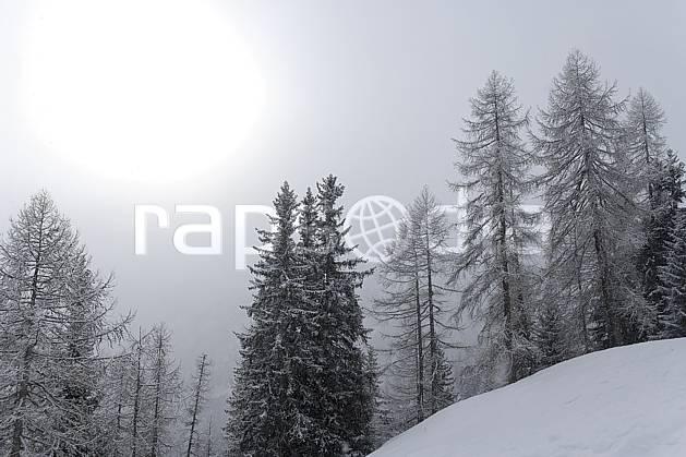 aa060742LE : Jour blanc en montagne, Alpes.  Europe, CEE, brouillard, C02, C01, mauvais temps arbre, forêt, moyenne montagne, nuage, paysage, soleil (France).