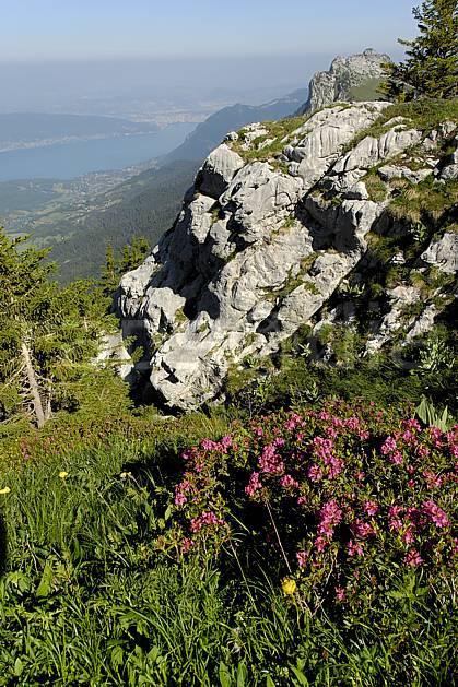 aa062519LE : Rhododendrons et lac d'Annecy depuis la Tournette, Haute-Savoie, Alpes.  Europe, CEE, fleur, C02, C01 Annecy 2018, flore, lac, moyenne montagne, paysage (France).