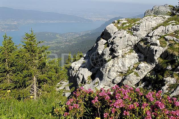 aa062520LE : Rhododendrons et lac d'Annecy depuis la Tournette, Haute-Savoie, Alpes.  Europe, CEE, fleur, C02, C01 Annecy 2018, arbre, flore, lac, moyenne montagne, paysage (France).