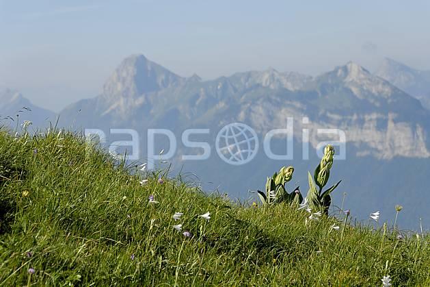 aa062521LE : Gentianes jaunes et massif des Bauges depuis la Tournette, Haute-Savoie, Alpes.  Europe, CEE, fleur, C02, C01 Annecy 2018, flore, moyenne montagne, paysage (France).