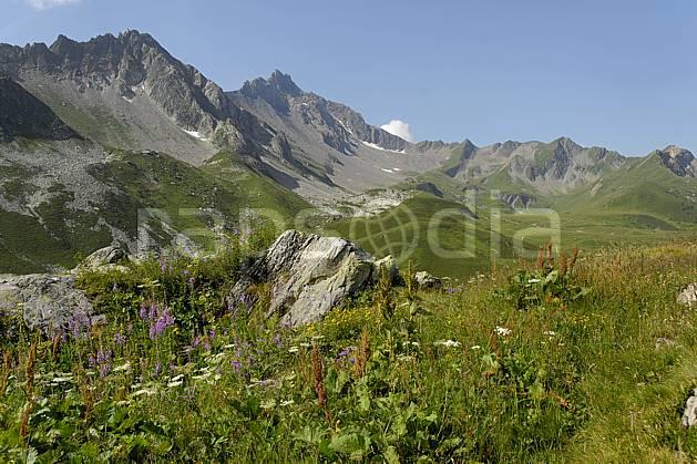 aa062964LE : Cormet de Roselend, Beaufortain, Savoie, Alpes.  Europe, CEE, fleur, C02, C01, alpage moyenne montagne, paysage (France).