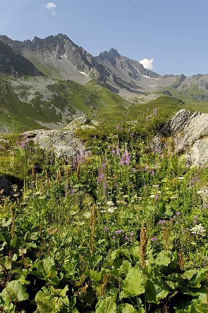 aa062968LE : Cormet de Roselend, Beaufortain, Savoie, Alpes.  Europe, CEE, fleur, C02, C01, alpage moyenne montagne, paysage (France).