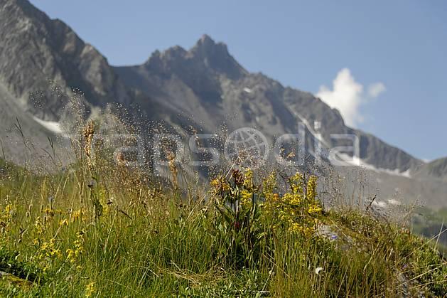 aa062969LE : Cormet de Roselend, Beaufortain, Savoie, Alpes.  Europe, CEE, fleur, C02, C01 moyenne montagne, paysage (France).