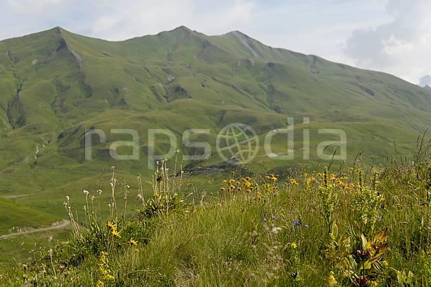 aa062971LE : Cormet de Roselend, Beaufortain, Savoie, Alpes.  Europe, CEE, fleur, C02, C01 moyenne montagne, paysage (France).