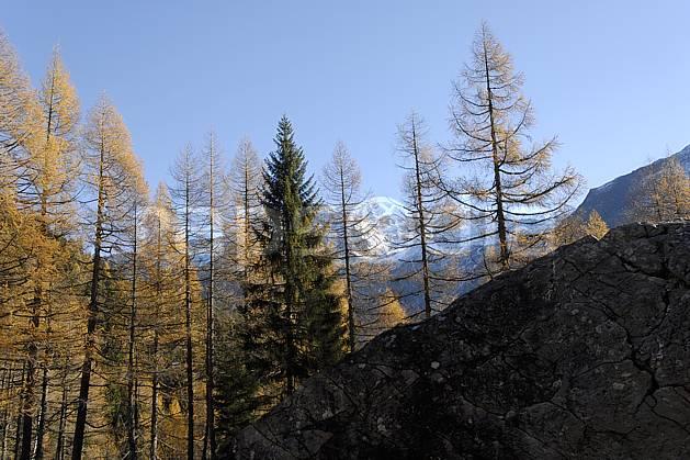 aa063628LE : Col des Montets, vallée de Chamonix, Massif du Mont Blanc, Haute-Savoie, Alpes.  Europe, CEE, C02, C01, épicéa arbre, forêt, moyenne montagne, paysage, Annecy 2018 (France).