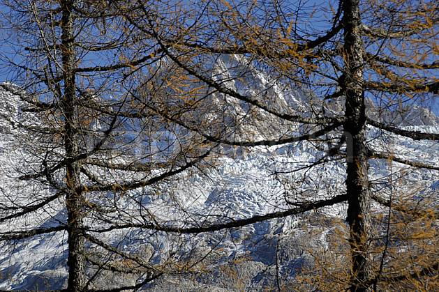 aa063629LE : Aiguille des Grands Montets, glacier de Lognan, Massif du Mont Blanc, Haute-Savoie, Alpes.  Europe, CEE, C02, C01, épicéa arbre, moyenne montagne, paysage, Annecy 2018 (France).