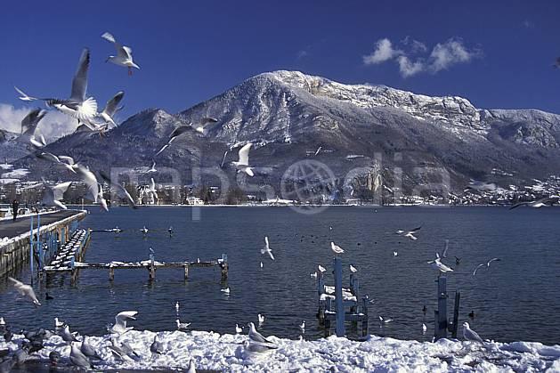aa0696-20LE : Mont Veyrier depuis le Paquier Annecy, Haute-Savoie, Alpes.  Europe, CEE, oiseau, mouette, C02, C01 faune, lac, moyenne montagne, paysage, Annecy 2018 (France).