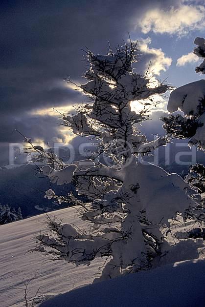 aa0696-35LE : Arbre enneigé, Bords du lac d'Annecy, Haute-Savoie, Alpes.  Europe, CEE, C02, C01, poudreuse gros plan, Annecy 2018 (France).