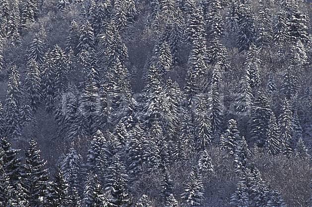 aa0697-22LE : Forêt enneigée, Bords du lac d'Annecy, Haute-Savoie, Alpes.  Europe, CEE, sapin, C02, C01 arbre, forêt, moyenne montagne, paysage, textures et fonds, Annecy 2018 (France).