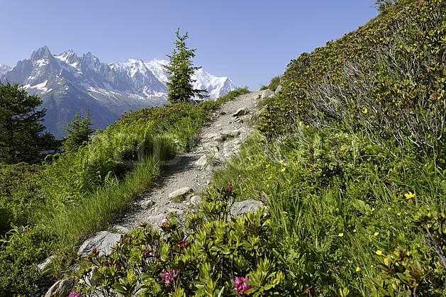 aa071456LE : Sentier du balcon sud et rhododendrons, massif du Mont Blanc, Aiguilles Rouges, Chamonix, Alpes.  Europe, CEE, fleur, C02 Annecy 2018, arbre, flore, moyenne montagne, paysage (France).