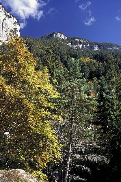 aa0841-16LE : Forêt, Le Pas du Roc, Haute-Savoie, Alpes.  Europe, CEE, ciel bleu, C02, C01 arbre, forêt, moyenne montagne, paysage, Annecy 2018 (France).
