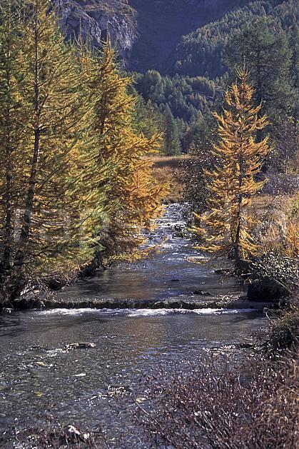 aa0842-09LE : Torrent de montagne, Le Monal, Savoie, Alpes.  Europe, CEE, mélèze, C02, C01 arbre, moyenne montagne, paysage, rivière (France).