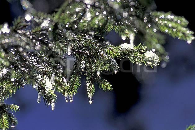 aa0869-32LE : Branches de sapin enneigée, Alpes.  Europe, CEE, sapin, branche, C02, C01 arbre, gros plan (France).