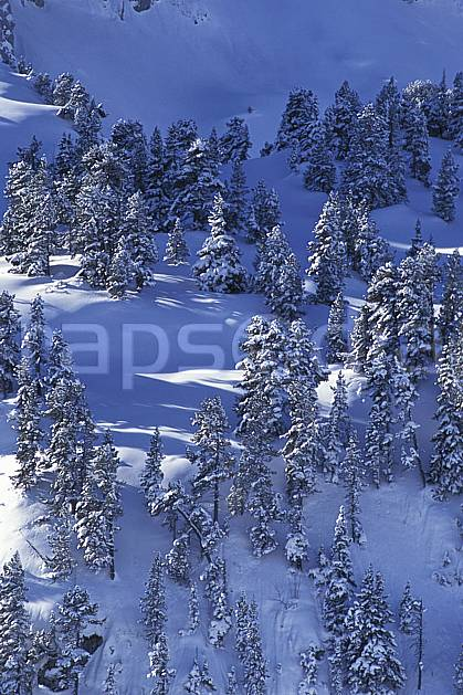 aa0896-01LE : Seythenex, Haute-Savoie, Alpes.  Europe, CEE, sapin, C02, C01 arbre, moyenne montagne, paysage, Annecy 2018 (France).