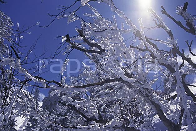 aa0929-31LE : Arbres enneigés, Chartreuse, Isère, Alpes.  Europe, CEE, ciel bleu, C02, C01, branche arbre, gros plan, moyenne montagne, paysage (France).