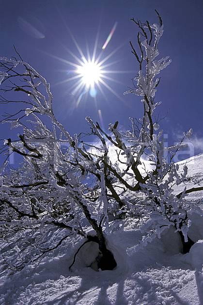 aa0929-32LE : Arbres enneigés, Chartreuse, Isère, Alpes.  Europe, CEE, ciel bleu, C02, C01, branche arbre, moyenne montagne, paysage, soleil (France).