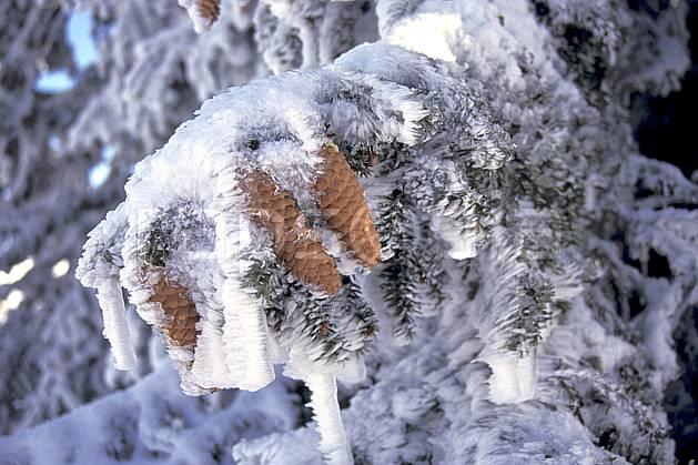 aa0930-06LE : Epicéa enneigés, Chartreuse, Isère, Alpes.  Europe, CEE, ciel bleu, sapin, C02, C01, branche arbre, gros plan, moyenne montagne (France).