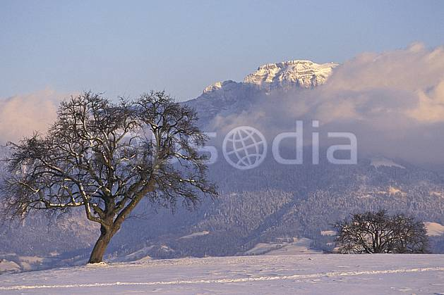 aa1078-23LE : Parmelan, Haute-Savoie, Alpes.  Europe, CEE, champ, C02, C01 arbre, moyenne montagne, nuage, paysage, Annecy 2018 (France).