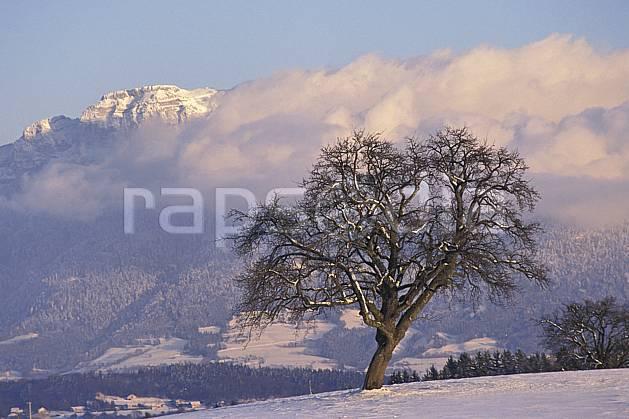 aa1078-25LE : Parmelan, Haute-Savoie, Alpes.  Europe, CEE, champ, C02, C01 arbre, moyenne montagne, nuage, paysage, Annecy 2018 (France).
