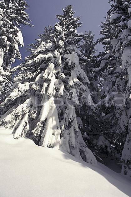 aa1082-01LE : Haute-Savoie, Alpes.  Europe, CEE, sapin, C02, C01 arbre, forêt, gros plan, moyenne montagne, paysage, Annecy 2018 (France).