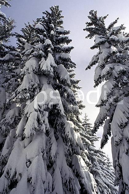 aa1082-02LE : Haute-Savoie, Alpes.  Europe, CEE, sapin, C02, C01 arbre, forêt, gros plan, moyenne montagne, paysage, Annecy 2018 (France).