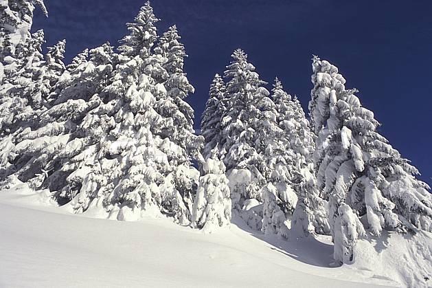 aa1082-05LE : Haute-Savoie, Alpes.  Europe, CEE, ciel bleu, sapin, C02, C01 arbre, forêt, gros plan, moyenne montagne, paysage, Annecy 2018 (France).