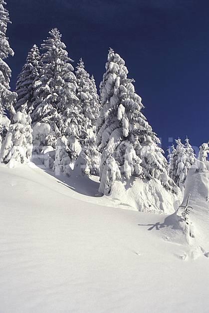 aa1082-06LE : Haute-Savoie, Alpes.  Europe, CEE, ciel bleu, sapin, C02, C01 arbre, forêt, gros plan, moyenne montagne, paysage, Annecy 2018 (France).