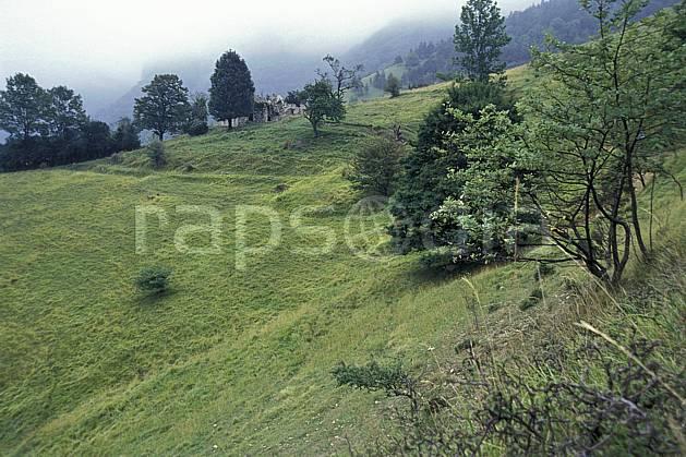 aa1231-47LE : Ambiances du Vercors, Isère, Alpes.  Europe, CEE, herbe, sapin, alpage, mauvais temps, C02, C01 arbre, moyenne montagne, paysage (France).