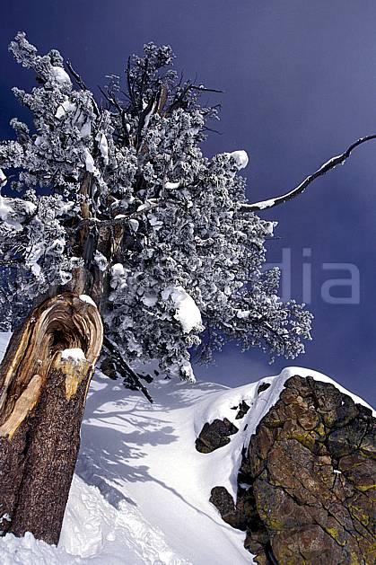 aa1999-15LE : Arbre givré, Wyoming.  Europe, CEE, tronc, branche, C02, C01 arbre, gros plan (France).