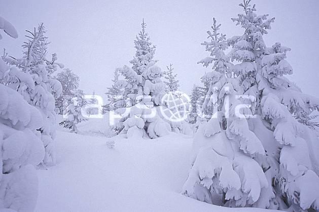 aa2123-06LE : La Clusaz, Haute-Savoie, Alpes.  Europe, CEE, brouillard, mauvais temps, sapin, froid, C02, C01 arbre, Annecy 2018 (France).