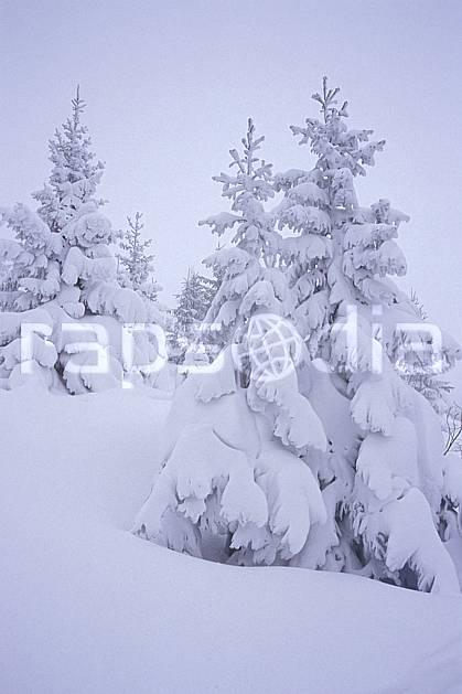 aa2123-07LE : La Clusaz, Haute-Savoie, Alpes.  Europe, CEE, brouillard, ciel nuageux, mauvais temps, sapin, froid, C02, C01 arbre, Annecy 2018 (France).