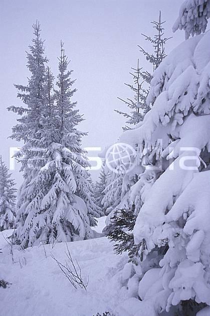aa2123-08LE : La Clusaz, Haute-Savoie, Alpes.  Europe, CEE, brouillard, ciel nuageux, mauvais temps, sapin, froid, C02, C01 arbre, Annecy 2018 (France).