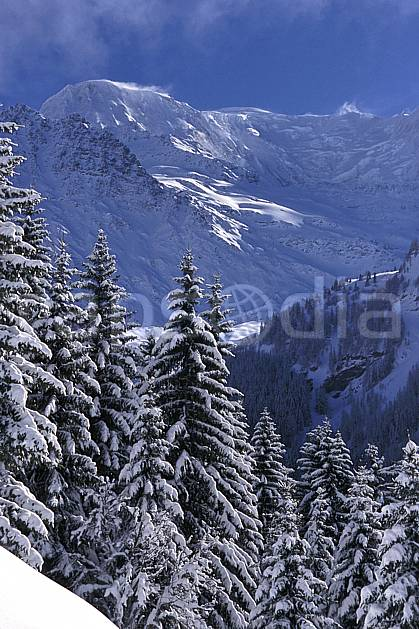 aa2156-16LE : Dômes de Miage, Massif du Mont Blanc, Haute-Savoie, Alpes.  Europe, CEE, ciel bleu, sapin, C02, C01 arbre, forêt, moyenne montagne, paysage, Annecy 2018 (France).