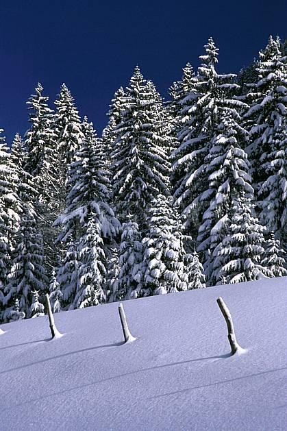aa2333-32LE : Forêt, Jura, Alpes.  Europe, CEE, ciel bleu, sapin, poteau, C02, C01 arbre, forêt, moyenne montagne, paysage (France).