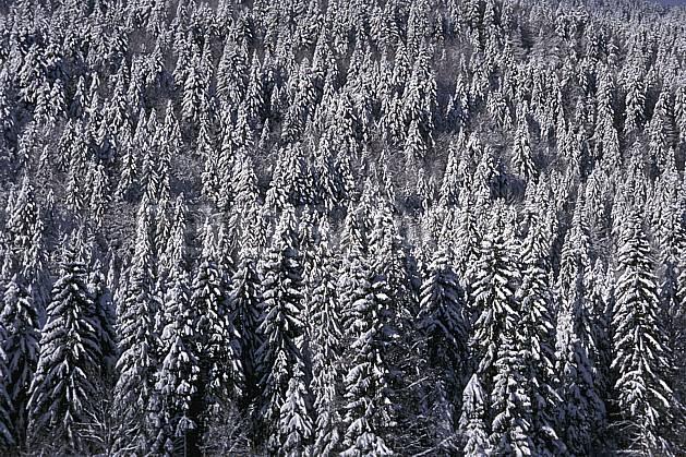 aa2334-13LE : Forêt, Jura, Alpes.  Europe, CEE, sapin, C02, C01 arbre, forêt, moyenne montagne, paysage, textures et fonds (France).