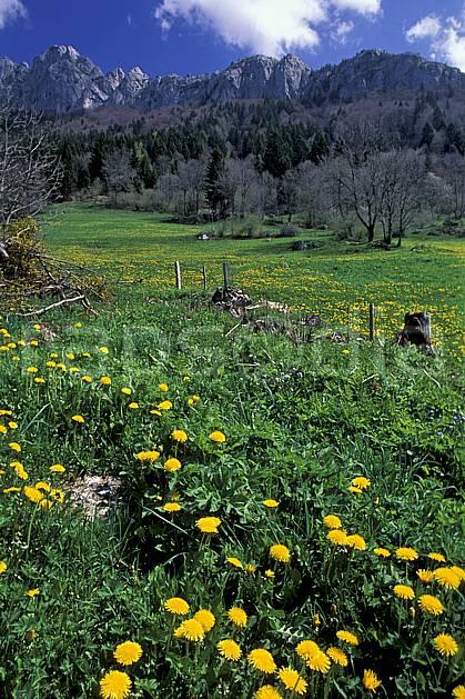 aa2432-21LE : Roc des Boeufs, Massif des Bauges, Savoie, Alpes.  Europe, CEE, fleur, pissenlit, ciel bleu, herbe, C02, C01 arbre, flore, moyenne montagne, paysage (France).