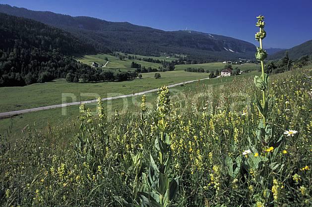 aa2451-06LE : Vallée de la Valserine, Monts Jura, Ain, Alpes.  Europe, CEE, champ, vallée, route, fleur, C02, C01 environnement, flore, forêt, habitation, moyenne montagne, paysage (France).