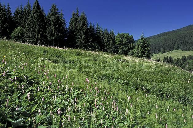 aa2452-07LE : Vallée de la Valserine, Monts Jura, Ain, Alpes.  Europe, CEE, champ, fleur, C02, C01 arbre, forêt, moyenne montagne, paysage (France).